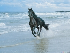 thumb3_black_horse_running