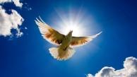 thumb3_flying_dove_1