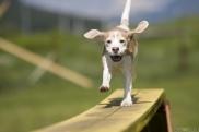 thumb3_happy_dog_2