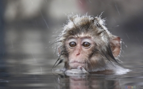 thumb3_small_monkey_in_the_water
